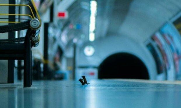 Бійку мишей на лондонській станції метро визнали найкращою фотографією у світі