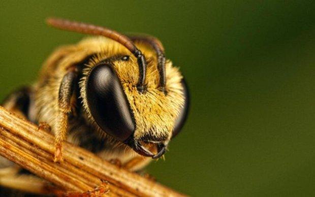 Эти насекомые терроризируют целое государство