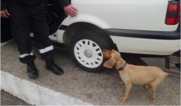 На Закарпатье убили пса-пограничника