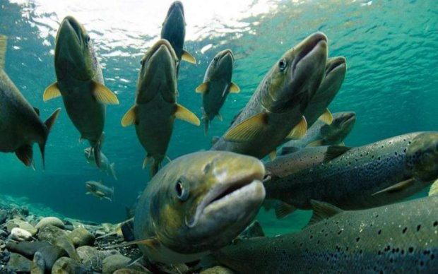Русские захватчики уничтожают редкую рыбу у британских берегов