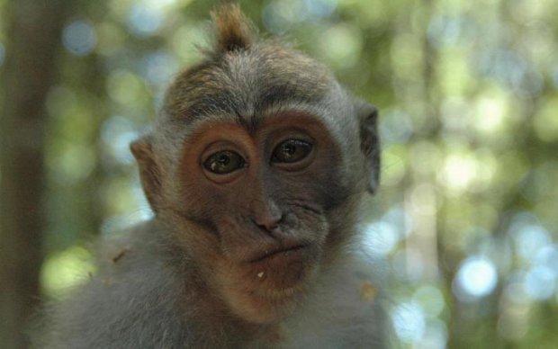 Запомните эту обезьяну: Астафьева стала жетвой необычного ограбления
