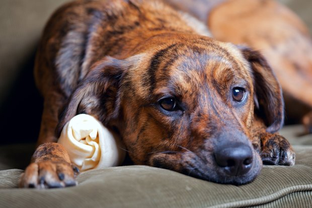 Бомж за пляшку горілки намагався заколоти собаку, коли господарка не змогла її повісити: страх і ненависть в Кременчуці