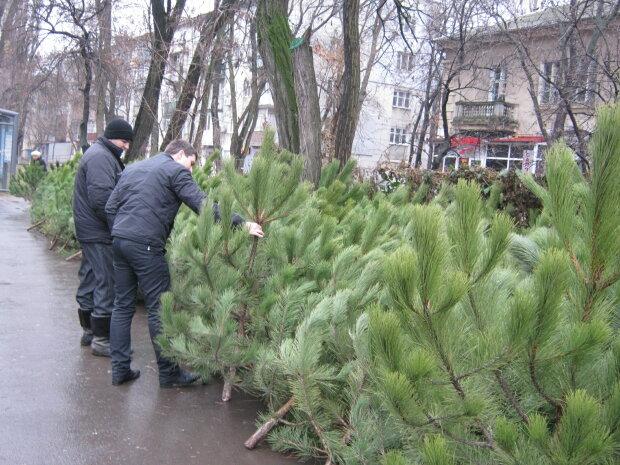Новый год 2020 и елка в Днепре: сколько придется выложить за зеленую красавицу