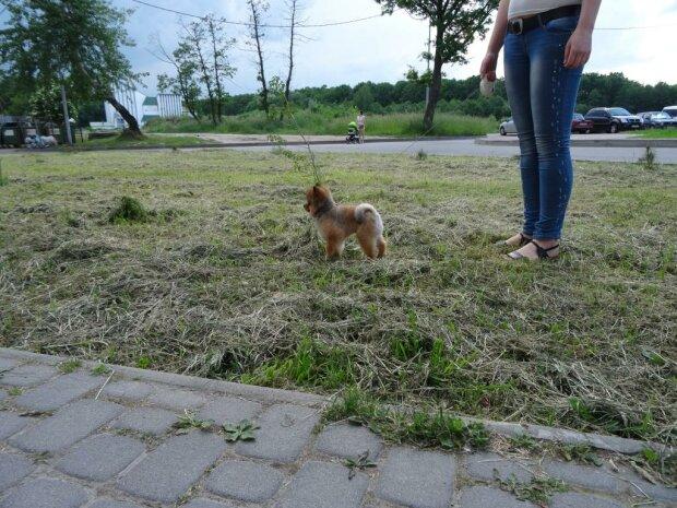 Прогулянка з собакою, Ілюстративне фото