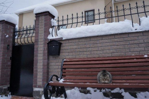 Коряк, Ратушняк и Захарченко сохранили свою недвижимость в Киеве
