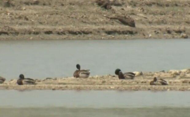 В Крыму начались проблемы с водой, скриншот из видео