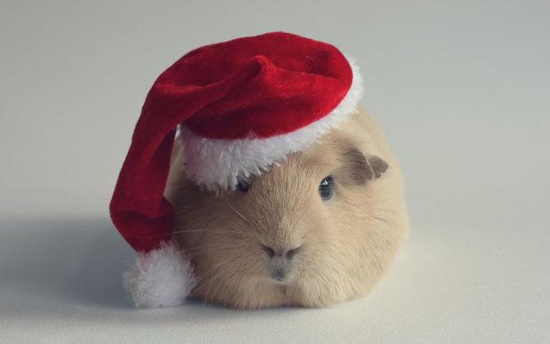 Анекдоти на 29 грудня захочеться приберегти до новорічного застілля