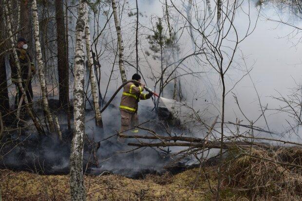 Пожар на Киевщине, фото из свободных источников