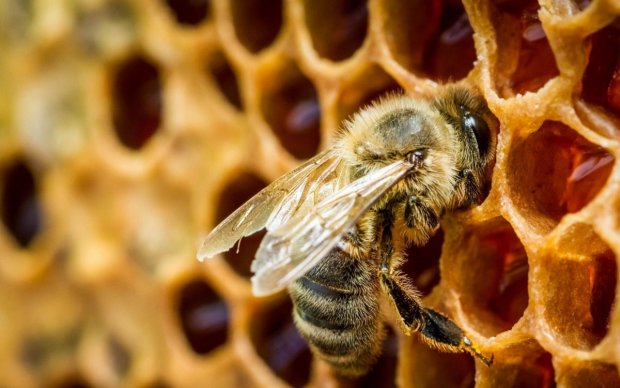 Сигналы из космоса: ученые раскрыли тайную связь пчел с далекой звездой