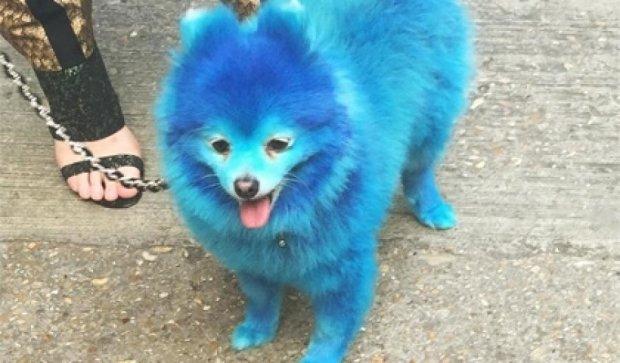 Голубая собака покорила парижский подиум