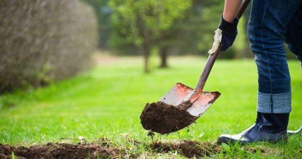 50 тисяч нових дерев з`явилося в Києві за останні 4 роки, - КМДА