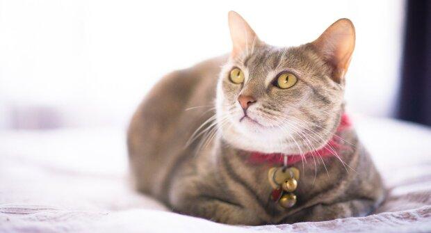 кошка, фото: alev.biz