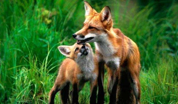 На Прикарпатье ищут опекунов для диких животных