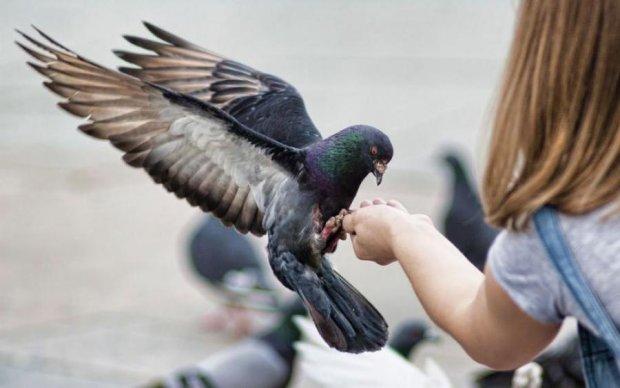 У голубей обнаружили безотказную систему защиты