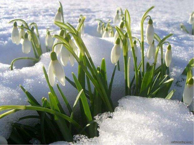 В Україні відзначають День Прохора Весновія 23 лютого: повір'я і прикмети