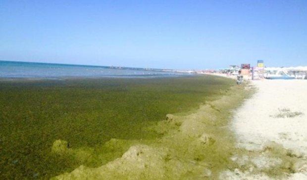 Грязные пляжи Херсонщини шокируют отдыхающих