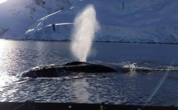 киты, фото с instagram.com/antarcticcenterua