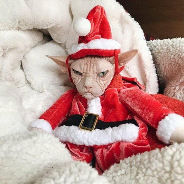 ″A very Merry Christsmas″: в мережі показали харизматичні ″різдвяні мордочки″ домашніх улюбленців