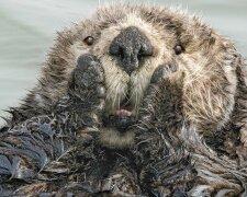 Найкращі кадри природи, фото: Comedy Wildlife Photography Awards