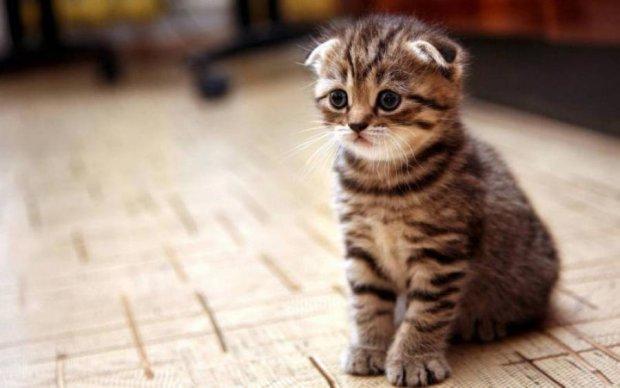 Живодер свернул беззащитному котенку шею на глазах у детей: фото
