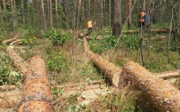 Загадкове вбивство: у лісі під Києвом знайшли трупи