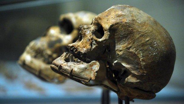 """Тайна """"Маленькой ноги"""": ученые нашли нового предка человека, эти факты меняют все"""