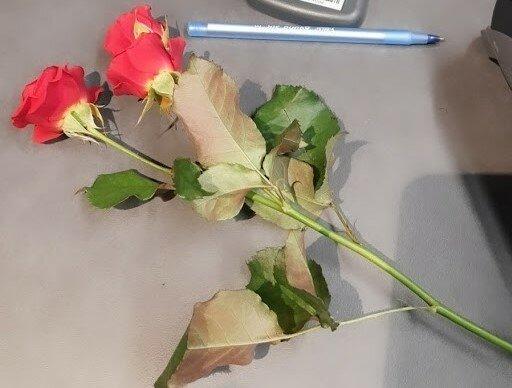 """Українка показала, як купити квіти в супермаркеті у розпал локдауну: """"Це жесть, кур*а!"""