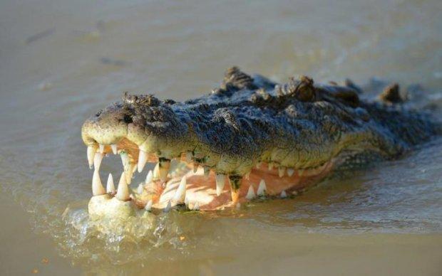 Россиянин пришел на пляж с крокодилом