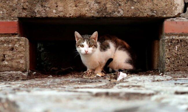 Вуличний кіт, фото: Уніан