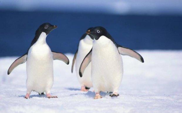 Арктический джекпот: самая милая и невероятная находка ученых впечатлила мир
