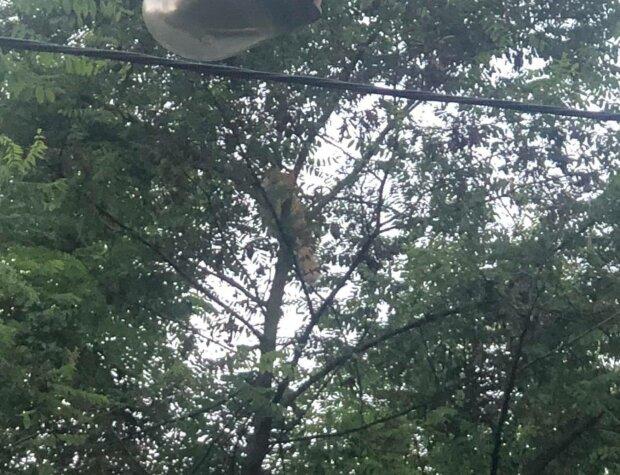 Во Львове перепуганный малыш три дня провел на дереве — плакал и звал на помощь