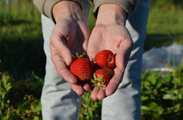 Главные правила огородника: каких ошибок нужно избегать для щедрого урожая