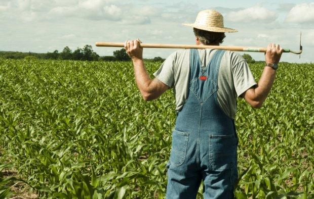 Обурені фермери поскаржилися владі на невловимих злочинців: наркомани пернаті