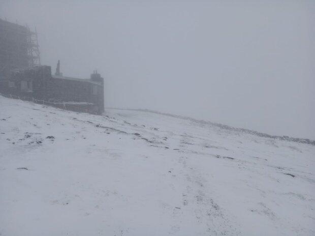 В Карпатах выпал снег, фото из фейсбук