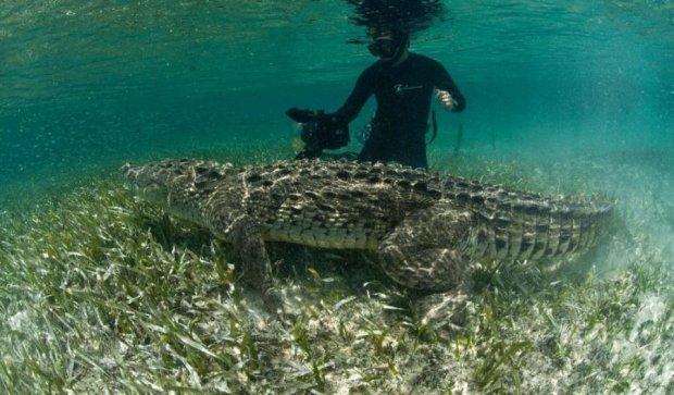 Фотограф розважився із гігантськими крокодилами