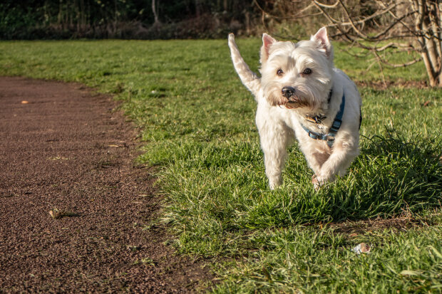 собака, фото Pxhere