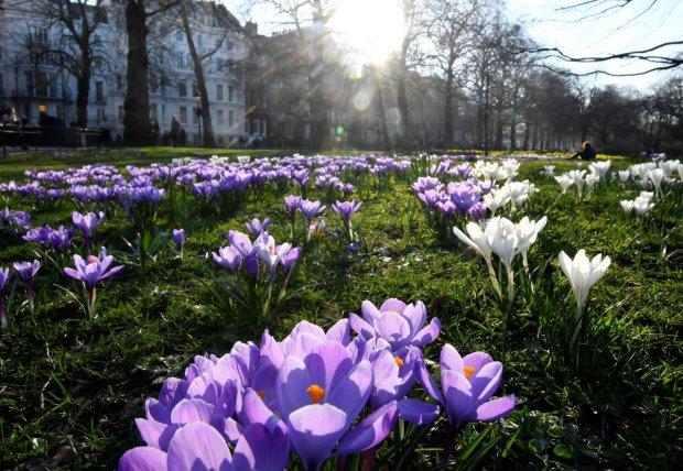 Погода на 28 березня: синоптик порадувала прогнозом