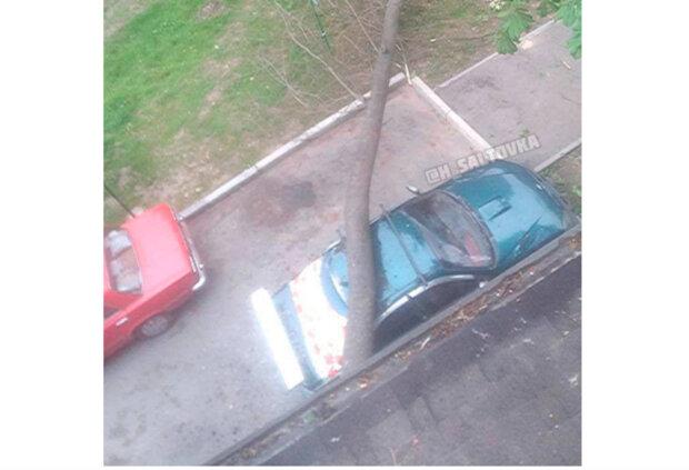 """Оскаженіла стихія влаштувала харків'янину добрий ранок: так виглядає """"вдала"""" парковка"""