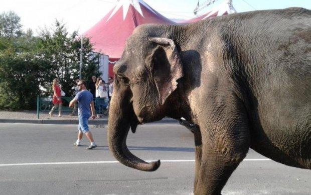 Грузовик с цирковыми слонами слетела с дороги, есть жертвы