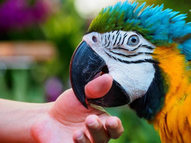 Найкращі меми на 17 травня: дівчинка з бойовим папугою та ковбой з хайповою піснею
