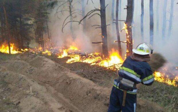 Пожежа в лісі, скріншот: YouTube