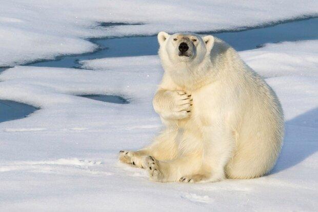 """""""Какое-то извращенное неуважение"""": в России """"подписали"""" белого медведя, обрекая животное на голодную смерть"""