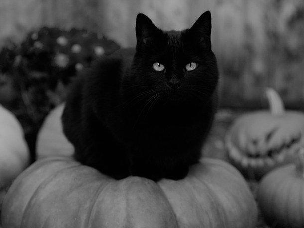 Истории ужаса: как Голливуд искал самого страшного черного кота в мире