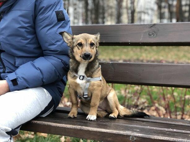 В Киеве собака нашла такое, что заставило хозяйку вздрогнуть: история, в которую трудно поверить