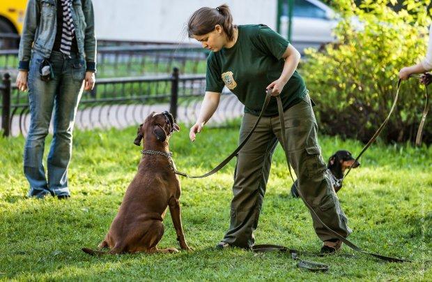 Садовий просить про допомогу: мер не може впоратись з собакою