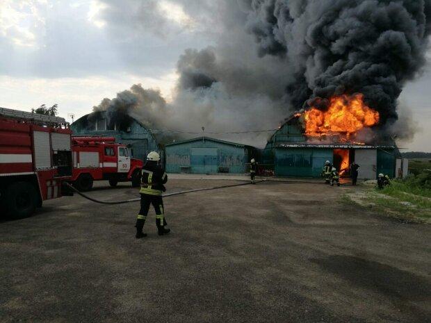 """Одесщину поглотил неуправляемый огонь, """"уничтожил все"""": кадры постапокалипсиса"""