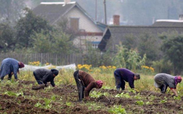 Згорблені і пітні: НБУ увіковічнив у грошах весняні страждання українців