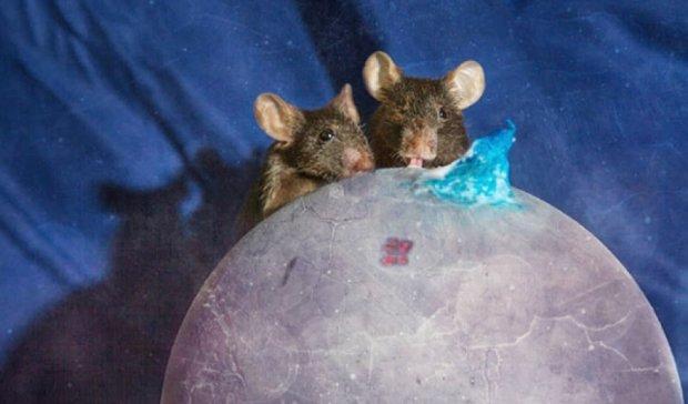 """Приречені кролики та миші стали героями """"Маленького Принца"""" (фото)"""