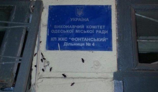 Одессу терроризируют тараканы-мутанты