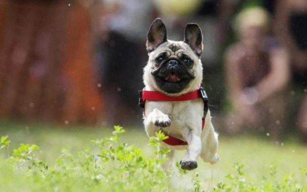 Більше ста років: в Україні знайшли собаку, якому позаздрить кожен